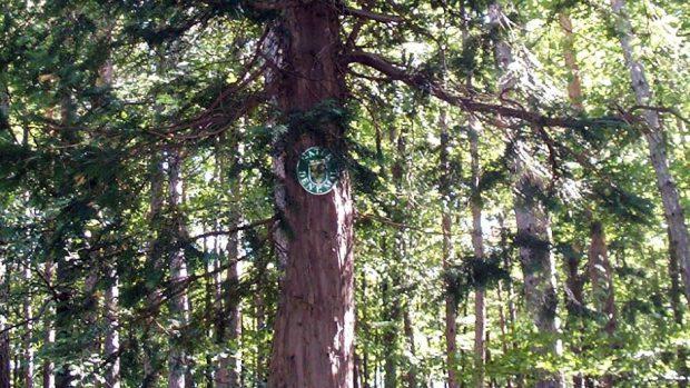 """Naturdenkmal """"Eibe in Feichtenbach"""", Pernitz/Feichtenbach"""
