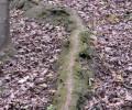 """Naturdenkmal """"Kalksinterrinne mit Quelle"""", Waldegg"""