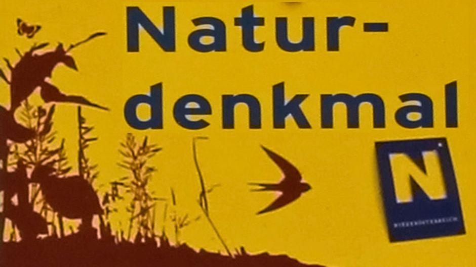 """Naturdenkmal """"Schwarzföhre"""", Gutenstein"""